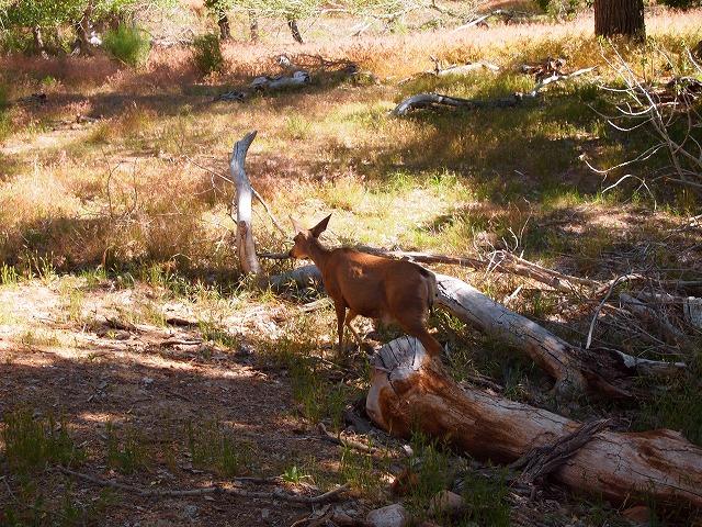 園内を走るバンビ