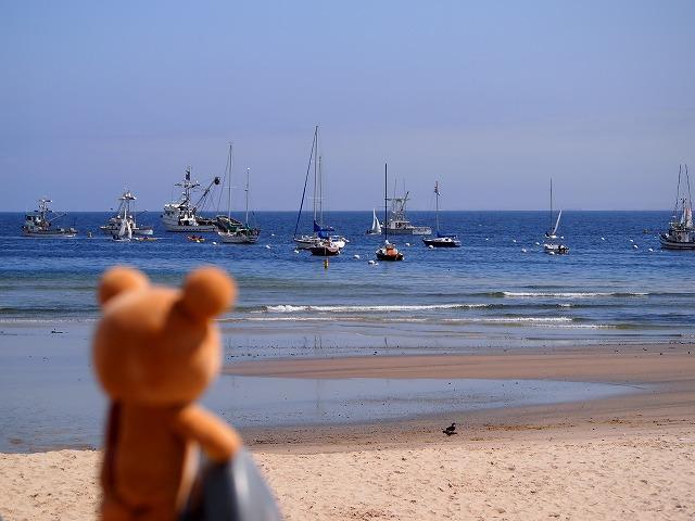 モントレーの海岸で船を眺めるクマ