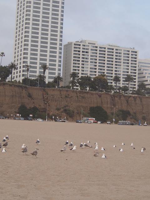 サンタモニカビーチのかもめ
