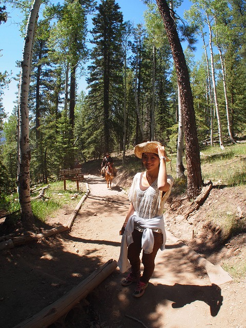 ハイキングコースに馬が来る