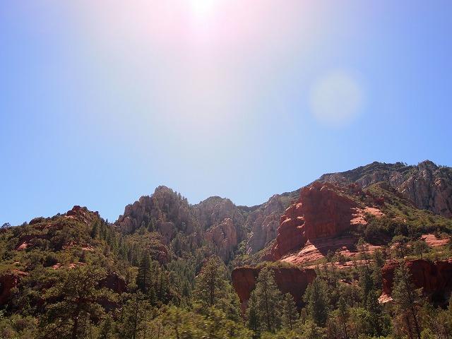 州立公園の樹々