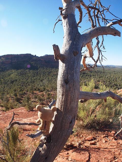木に腰掛けて絶景堪能